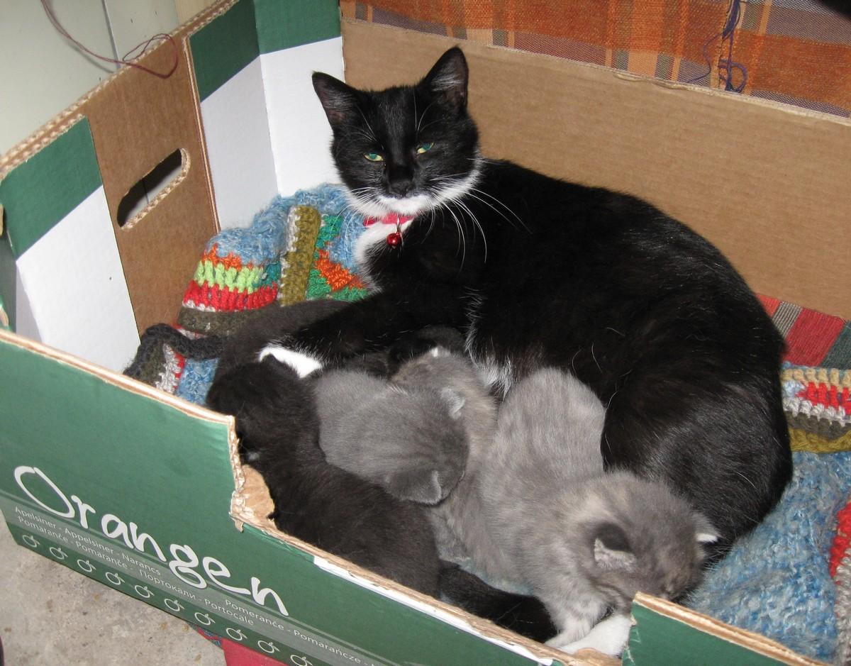 Kočky mám rád rád se podíván na galerii koček a tady jsou